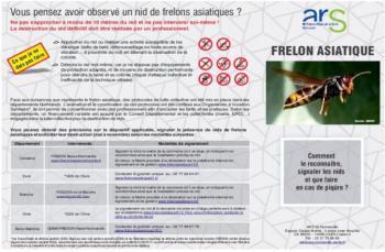 frelons-asiatique1